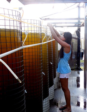 A TCBES Student deposits food into Aquaculture tanks